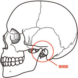 頭蓋骨(側面)説明なし